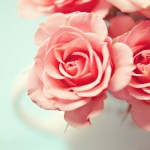 Luscious Lifer favourites - mylusciouslife.com - lovely pink roses