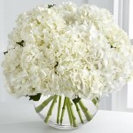 white hydrangeas photo in vase