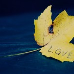 True blue: love written on leaf with navy blue background