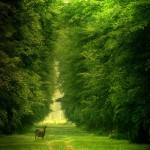Luscious green park scene with deer