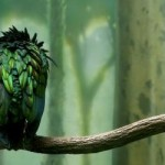Photos of feathers - Luscious blog - feathers pictures