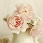 Luscious flowers- help me with my wedding