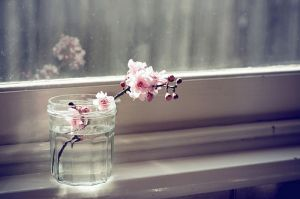 Photos of vases - spring blossom in glass jar.jpg