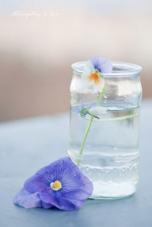 Photos of vases - vase of water and single stem.jpg