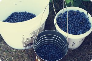 Blue and white decor and fashion - buckets filled with blueberries.jpg