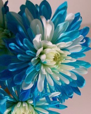 Blue and white photos - blue and white lusciousness2.jpg