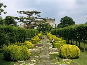 Golden-yew-hedges at Highgrove House hardens.jpg