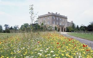 Prince Charles and his garden at Highgrove - wildflowers.jpg