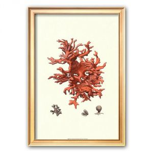 Art.Com Red Coral Iii Framed Art Print.jpg