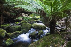 Tasmanian activities - mt-field-national-park-tasmania.jpg