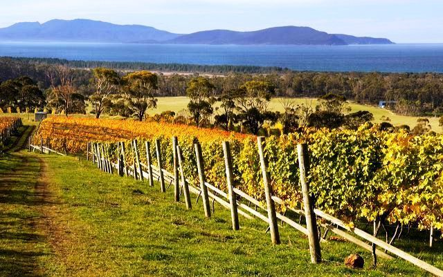 tasmanian wineries-bream-creek - stylish travel with luscious blog.jpg