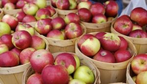 red-apples_in buckets - tasmanian fresh food product photos.jpg