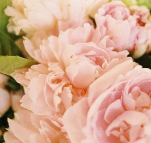 Floral decor fashion - Peonies - Floral photography - photos.jpg