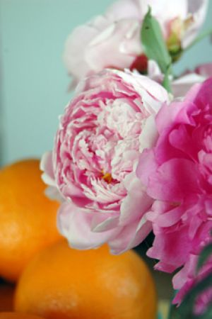 Floral flowers - Use floral to bring in colour - Peonies.jpg