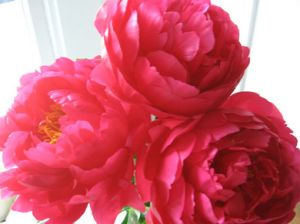 Floral photos - Floral patterns - Vintage floral inspiration - peonies.jpg