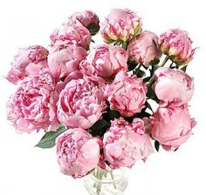 Images of floral fashion and decor - Floral designers - Peonies.jpg
