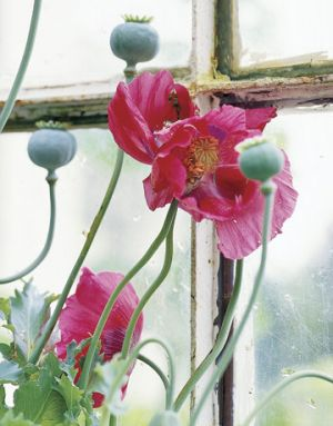 Modern floral designs - Countryliving.com - Nova Scotia Country House - Poppies in Bloom.jpg