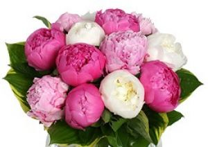 Peonies - inspired by nature - Floral design in fashion and decor.jpg