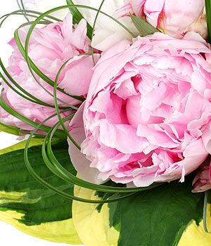 Peonies pictures - Using floral in the home and in fashion - mylusciouslife.jpg