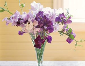 Photos of floral design - Countryliving.com - Purple sweetpeas in Vase.jpg
