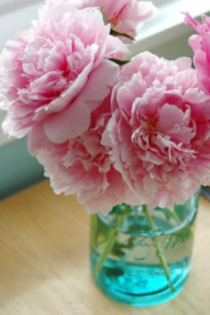 Photos of floral design - Using floral in the home and in fashion - Peonies.jpg