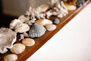 Beach homes pictures - decorating your beach house - Luxury beach houses - Beach houses style - seashells.jpg