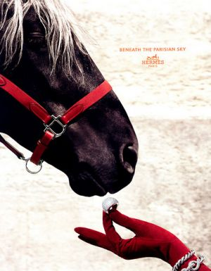 Pictures - Hermes horse equestrian ad.jpg