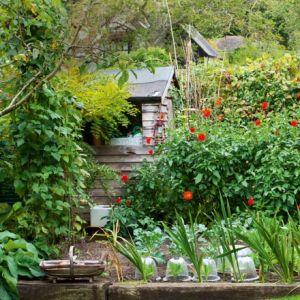 Garden-tour-country-cottage-garde-Homesgardens.jpg