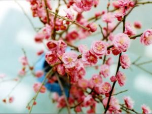Luscious pink blossom - Living lusciously.jpg