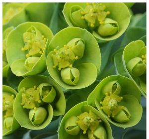incredible green flowers - Live lusciously with LUSCIOUS.jpg