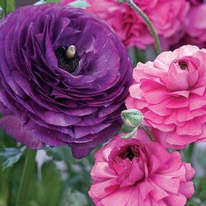 mylusciouslife.com - Pink purple flowers.jpg