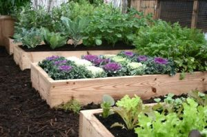 raised vegetable beds in garden.jpg