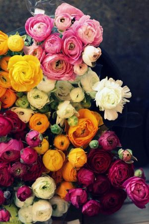 Sophisticated colour - www.myLusciousLife.com - ranunculus in every color.jpg