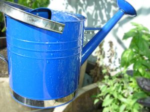 Colourful life - www.myLusciousLife.com - watering can - vegetable garden.jpg