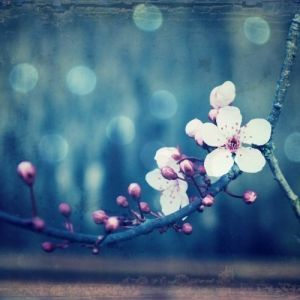 Plum and Blue Art Photography Plum by honeytree.jpg