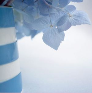 Blue hydrangeas in blue and white striped vase.JPG