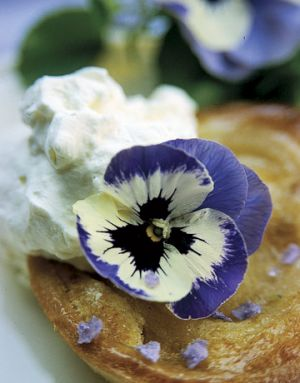 Countryliving.com - Turbo Blue Wings Pansy.jpg