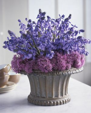 Martha Stewart - Purple Pairings - Spanish Bluebells and Blossoming Chive.jpg