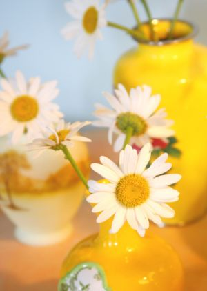 Cheery yellow - Flowers white daisies in yellow vase.jpg