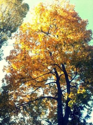 Tree with yellow leaves in autumn - black and yellow.jpg