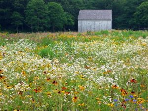 Bunny Mellon - Cape Cod garden meadow.jpg
