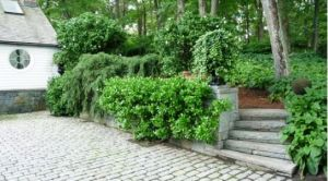Photo by Oscar de la Renta of his gardens - Annette and Oscar de la Renta - steps.jpg