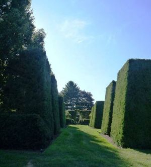 Photo by Oscar de la Renta of his gardens in Kent Connecticut - hedges.jpg