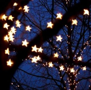 star fairy lights in trees - www.myLusciousLife.com.jpg