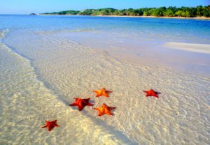 starfish on white beach - www.myLusciousLife.com.jpg