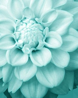 Pastel color vintage - myLusciousLife.com - delicious pale blue flower.jpg