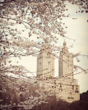 Sepia inspired New York cherry blossom glamour - pretty in pink.jpg