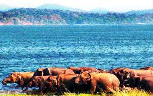 sri-lanka-holiday-elephants.jpg