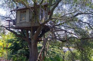 Treehouse in Burlingame California is owned and built by Doug and Linda Studebaker.jpg