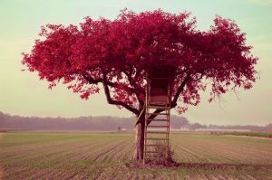 cute-ladder-nature-photography-red-Favim.com-360984_large.jpg